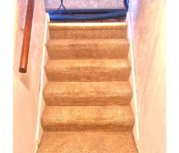Carpet or Upholstery Cleaning for the holidays After