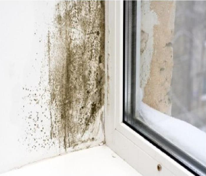 Mold Remediation Yes you can get mold in the Winter months