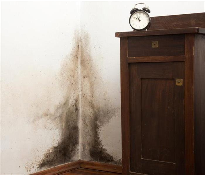 Mold Remediation Matteson Mold Remediation--Why Hire Professionals
