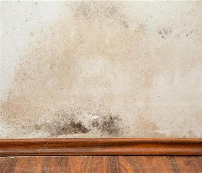 Mold Remediation Mold - Why hire professionals?