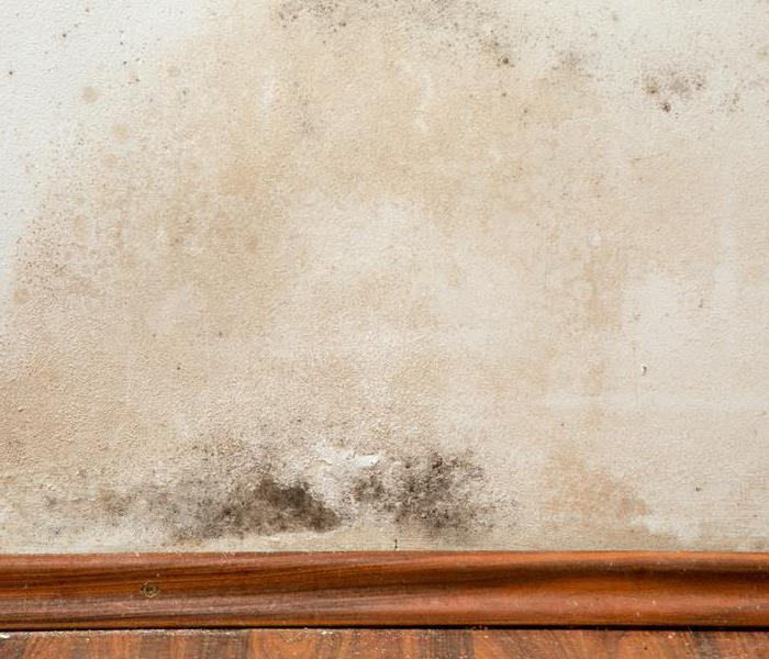 Mold Remediation SERVPRO - We are the pros you need for mold problems in Olympia Fields